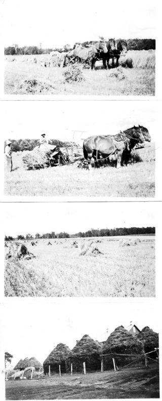 Horses_haying